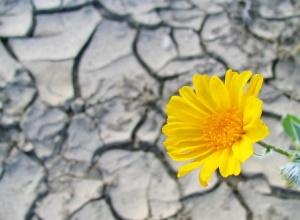 resilience by Ioana Davies