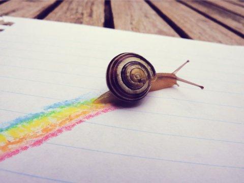 Rainbow_snail